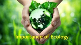 importance-of-ecology.jpg