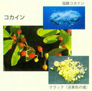 yakubutu04.jpg